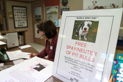 Sarah Minor — sminor@shawmedia.com Hinsdale Humane Society offered free spay and neuter vouchers for pit bulls on Friday, Feb. 1.