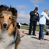 Jeff Krage – For the Kane County Chronicle<br /> Maddie, owned by Jackie Acosta of St. Charles, stares into the camera while competition for best trick goes on during Saturday's dog festival at Lord of Life Church in LaFox.<br /> LaFox 9/22/12