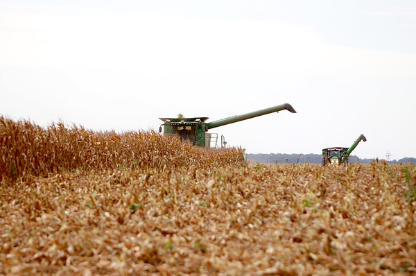 Farmer Chris Gould harvests corn from one of his fields on Perry Road in Maple Park Wednesday morning.