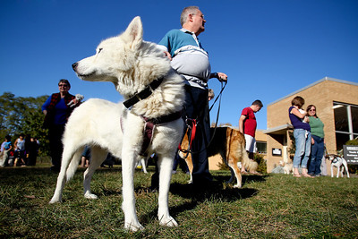 "Mike Greene - mgreene@shawmedia.com Arianna, a siberian husky, watches one way as her handler Ed Church, of Algonquin, watches the other following the second annual ""Blessing of Animals"" at St. Margaret Mary Church Sunday, September 30, 2012 in Algonquin. Over 100 individuals came out with their pets-- which ranged from hermit crabs and mice to dogs and goats-- for the traditional Franciscan blessing as well as a raffle for small prizes."