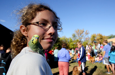 "Mike Greene - mgreene@shawmedia.com Victoria Mankowski, 11 of Crystal Lake, looks around the crowd as her rare parakeet Rio perches on her shoulder during the second annual ""Blessing of Animals"" at St. Margaret Mary Church Sunday, September 30, 2012 in Algonquin. Over 100 individuals came out with their pets-- which ranged from hermit crabs and mice to dogs and goats-- for the traditional Franciscan blessing as well as a raffle for small prizes."