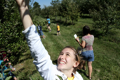 Mike Greene - mgreene@shawmedia.com Catie Klug, 13 of Lindenhurst, jumps to pick an apple high on a tree at Royal Oak Farm Orchard Tuesday, September 11, 2012 in Harvard. An early freeze combined with drought conditions cut this year's harvest at the farm by about 70%, causing the orchard to limit the amount pickers can take to about 10 apples.