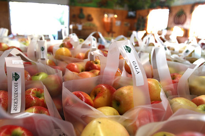 Mike Greene - mgreene@shawmedia.com Varieties of apples sit packaged for prospective customers Tuesday, September 11, 2012 at Royal Oak Farm Orchard in Harvard. An early freeze combined with drought conditions cut this year's harvest at the farm by about 70%.