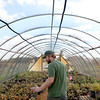 Andy Olnas, restoration technician with the Kane County Forest Preserve District walks through a greenhouse full of budding oak trees at the forest preserve district's Sugar Grove Township facility.
