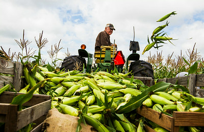 Hnews_adv_Corn_Harvest_1.jpg