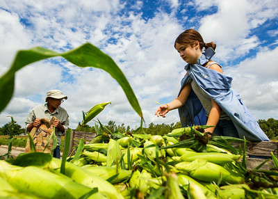 Hnews_adv_Corn_Harvest_1b.jpg