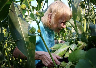 hnews_adv_harvest_corn_
