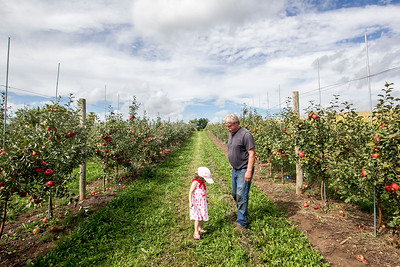 HPlay_adv_Apple_Picking_2.jpg