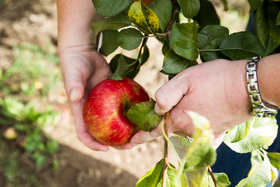 HPlay_adv_Apple_Picking_4.jpg