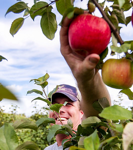 HPlay_adv_Apple_Picking_COVER.jpg