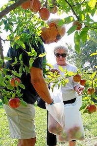 LCJ_0929_Apple_Orchard_B
