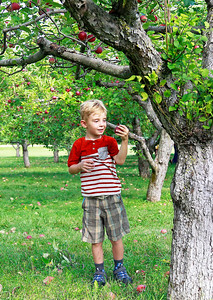 LCJ_0929_Apple_Orchard_F