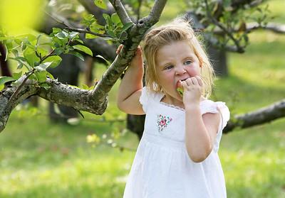 LCJ_0929_Apple_Orchard_G