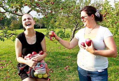 LCJ_0929_Apple_Orchard_H