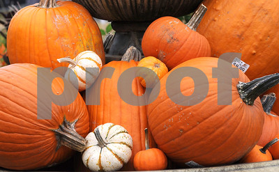 It's pumpkin time at Wannamaker's Home and Garden Fall Festival on Saturday, Septemer 24 in Downers Grove.  Steve Bittinger for Shaw Media