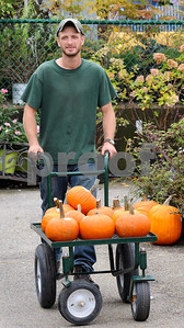 Greenhouse sales associate Zach Rahn wheels in a fresh batch of pumpkins at Wannamaker's Home and Garden Fall Festival on Saturday, Septemer 24 in Downers Grove.  Steve Bittinger for Shaw Media