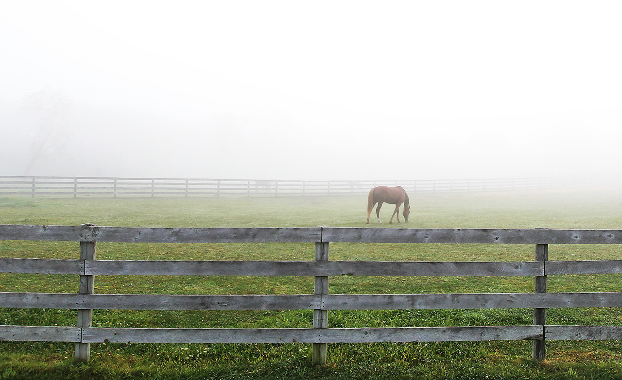 hnews_thu914_fog_horses