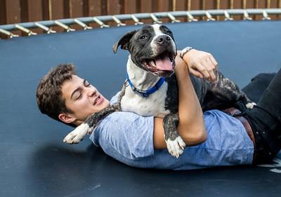 hstyle_adv_adopted_pitbulls_03.jpg