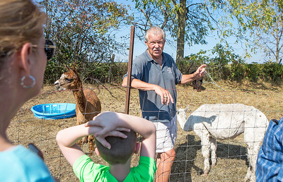 Mike Greene - For Shaw Media  Al VanMaren explains the sheering process for Suri alpacas during the 3rd annual McHenry County Farm Stroll Sunday, September 24, 2017 at ALsPACAs of Dutch Mill Farms in Harvard. This year's free event included 12 farms featuring apple orchards, vegetable growers, dairy cows, beef cattle, pigs, sheep, goats, chickens, turkeys, horses, alpacas, honey bees, perennial plants, hydroponics and more.