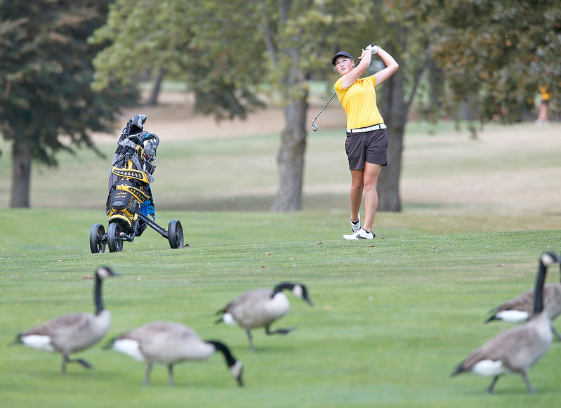 John Konstantaras - for Shaw Media Jacob's Roslyn Leitner hits over a gaggle of geese on the 8th fairway during the Fox Valley Conference Tournament at Crystal Woods Golf Club on Wednesday, September 27, 2017 in Woodstock, Illinois. Leitner finished in 6th place, Crystal Lake Coop won the tournament and Molly Lyne won the individual title.