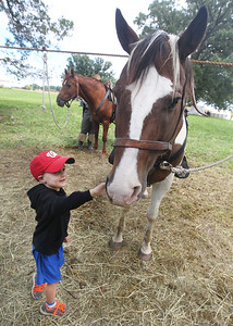 Candace H. Johnson-For Shaw Media Jonah Weaver, 4, of Round Lake pets a 3rd Tennessee Calvary horse named, Jack, during Hainesville's Civil War Encampment & Battle at the Northbrook Sports Club on Hainesville Road. (9/9/18)