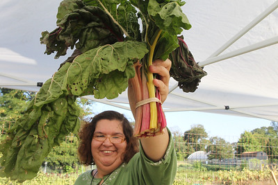 Candace H. Johnson-For Shaw Media Stephanie Schackney, of Grayslake, a volunteer, shows a bunch of Swiss chard for sale at the Farm Market at the College of Lake County Campus Farm in Grayslake during the Lake County Farm Stroll. (9/16/18)