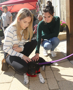 Candace H. Johnson-For Shaw Media Lily McGowan and Sarah Atkinson, both 17, of Gurnee pet Moxie, a ten-week-old puppy, available for adoption through Placing Paws Rescue, of Libertyville during Petpalooza at the Lehmann Mansion in Lake Villa. (9/23/18)