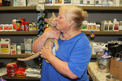 Candace H. Johnson-For Shaw Media Ann Hughes, of Hainesville, program manager with Spay & Stay, holds Cheeto, a three-month-old orange tabby during the Spay and Stay Labor Day Weekend Kitten Adoption hosted by Grayslake Feed Sales in Grayslake. (8/31/19)