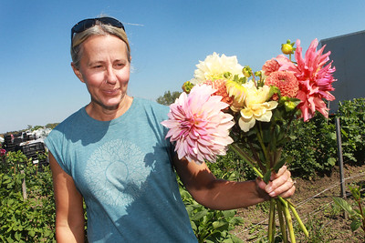 Candace H. Johnson-for Shaw Media Tania Cubberly, flower farmer and owner of Skyfall Flowers, puts together a bouquet of Dahlias she grows on her farm within the Prairie Crossing Farm in Grayslake. Her flowers are available at the Libertyville Farmers Market on Thursdays 7am to 1pm through October 21st.  (9/17/21)