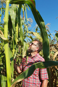 Candace H. Johnson-for Shaw Media Eric Carlberg, of Kenosha, Wis., program manager with the Prairie Farm Corps Liberty Prairie Foundation, stands among the corn stalks as he checks out one corn on the cob while talking about different varieties of corn grown on the farm that will eventually be used to make tortillas at the Prairie Crossing Farm in Grayslake.  Prairie Crossing Garm is a certified organic farm. (9/17/21)