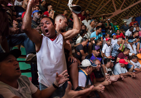 LA PALMA, CUBA - A man celebrates after his rooster wins the fight.