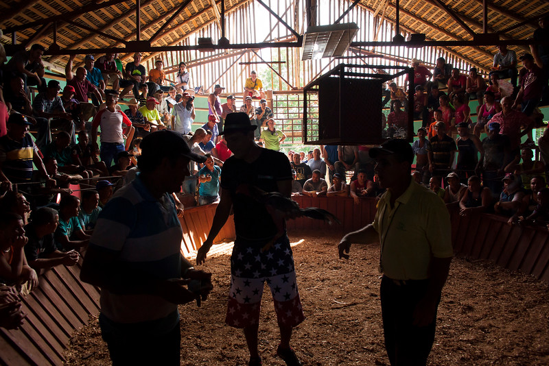LA PALMA, CUBA - A cockfight owner and two handlers step into the ring in preparation for a fight.
