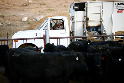 Dominic Beyer feeds cattle on his family's farm on Saturday, Nov. 2, 2019 in Sidney, NE.