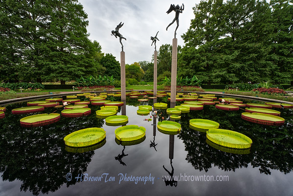 Reflections of Giant Victoria Water Lilies