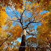 Autumn Peaking