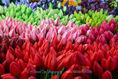 Ameterdam Flower Market