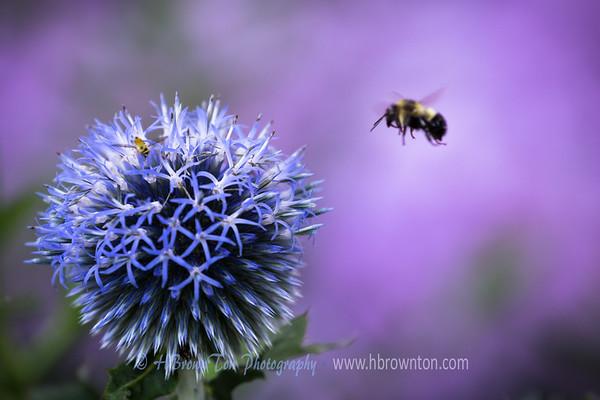 A Buzzy Day...