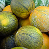Shades of melon.  Jeff Black