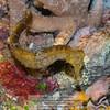 Seahorse<br /> Photo-a-Day 9/5/2012 Bill Stone