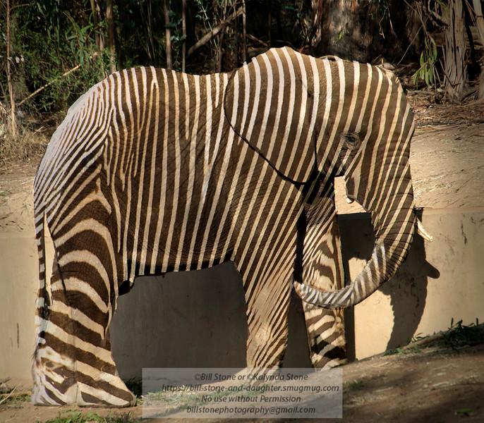 Zebraphant<br /> Photo-a-Day 11/9/2012 Bill Stone
