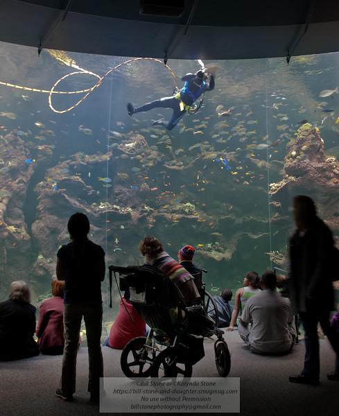 Cleaning the Window - Steinhart Aquarium