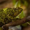 chameleon<br /> Photo-a-Day 10/7/2013 Bill Stone