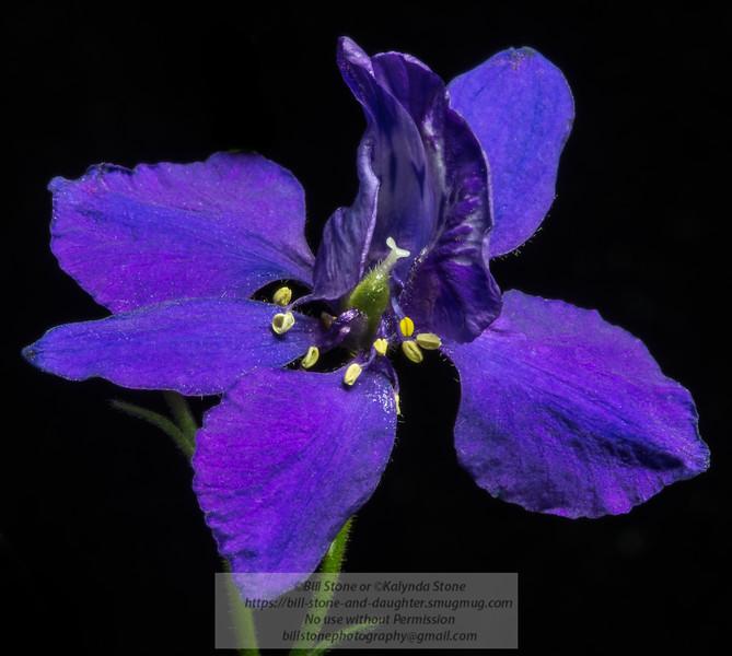 Purple flower from my flower garden<br /> Photo-a-Day 8/6/2013 Bill Stone