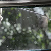 Video of Chickadee hitting window to chase away that other male