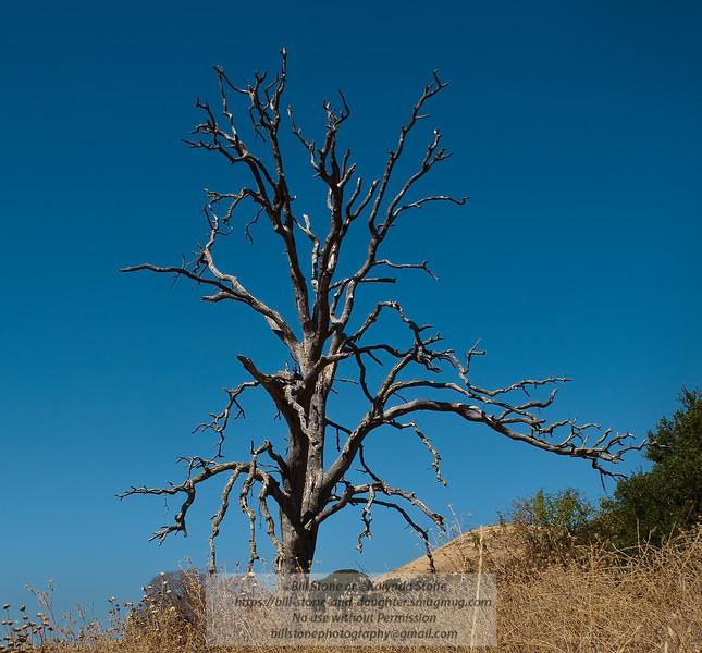 Dead Tree - Mt. Diablo Photo-a-Day 9/28/2011 Bill Stone
