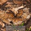 Decomposing pumpkin week 9 Photo-a-Day 12/28/2011 Bill Stone