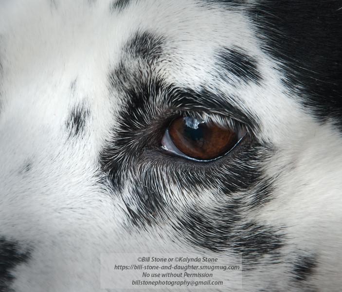 1/24/2011 Bill Stone Daisy Eye