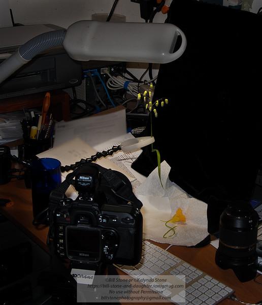 My very sophisticated macro studio. Photo-a-Day 5/25/2011 Bill Stone