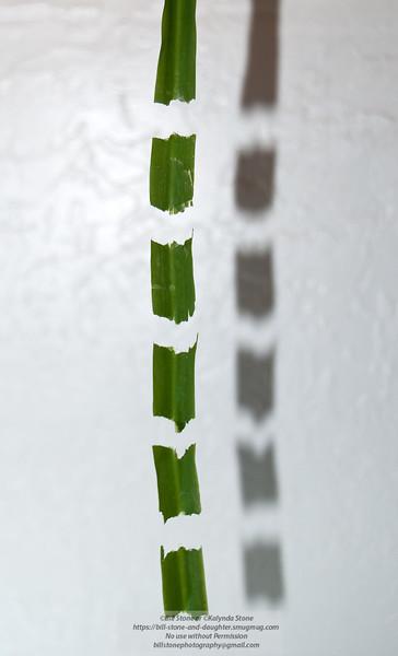Magic leaf (no photoshop manipulation ) Indian Soap Plant (Chlorogalum pomeridianum) Photo-a-Day 5/29/2011 Bill Stone