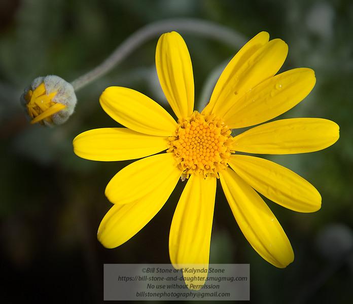 Yellow. Photo-a-Day 2/14/2011 Bill Stone
